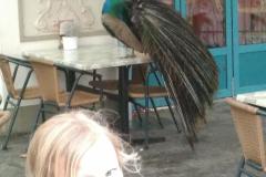Deze pauw logeert in de Efteling.. :)