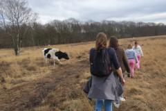 Langs de koeien