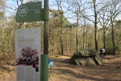 Hunebed D8 (Drenthe, Anloo)